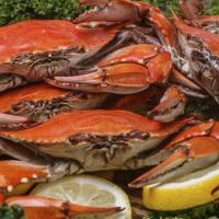 The Chesapeake Crab & Beer Festival