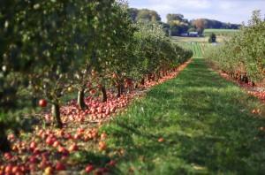 Howard County farms